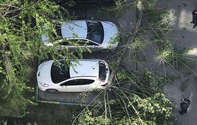 Лайфхаки: как получить деньги, если на автомобиль упало дерево
